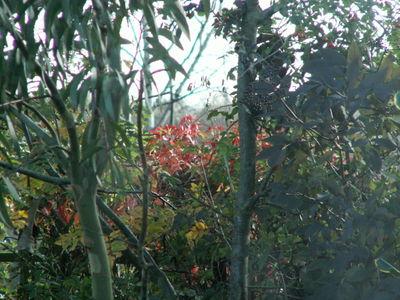 Autumn gold 2008 008