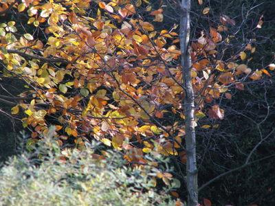 Autumn gold 2008 007