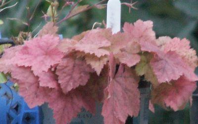Autumn gold 2008 010