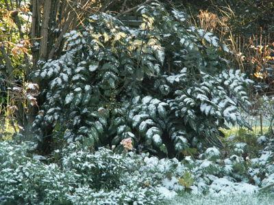 First snow 006
