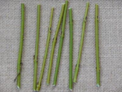 Twig grid 001