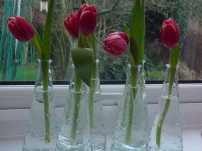 Tulips in vases 001