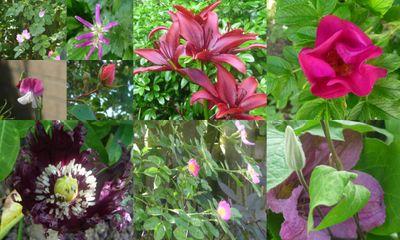 Midsummer blooms 2