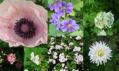 Midsummer blooms 4