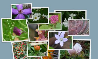 Colour in the garden Oct 2010