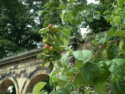 Alnwick_garden_040