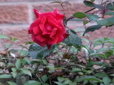 5_september_2008_003