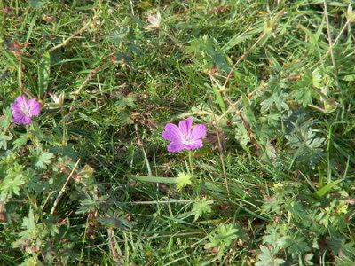 Druridge_september_2008_001